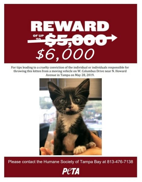 Tampa kitten flyer