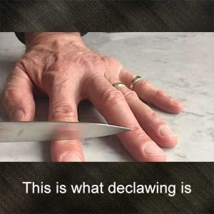 This is what declawing is