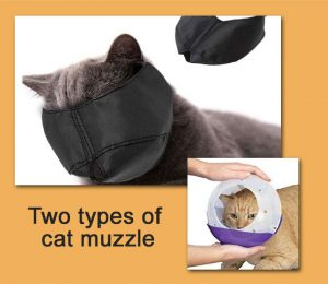 Two types of cat muzzle