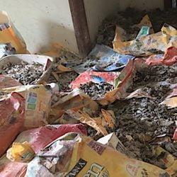 Worst case of cat hoarding?