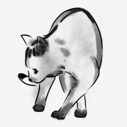 Cat pacing