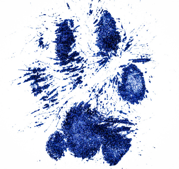 Paint on cat's paws pawprint