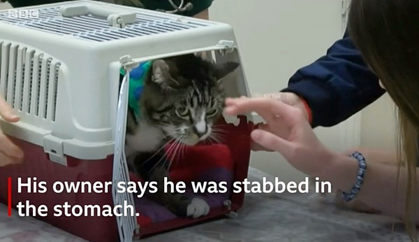 Brighton cat killer victim