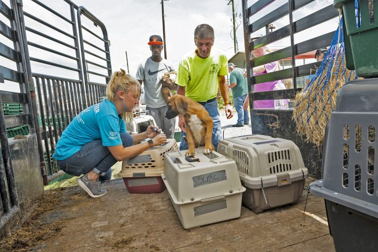 The Humane Society of the United States, along with shelter workers and volunteers assists in evacuating animals from the St. Landry Parish Animal Control and Rescue to the nearby St. Landry airport where 116 dogs and 18 cats will be flown out ahead of hurricane Berry on July 12th 2019.