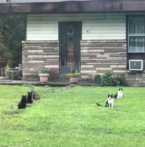 2 of each cat at abandoned house