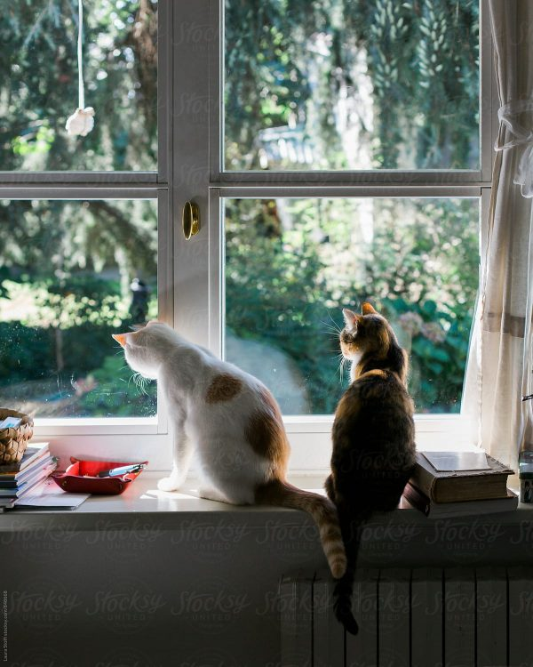 Cats looking out of window might rarely lead to one succumbing to redirected aggression