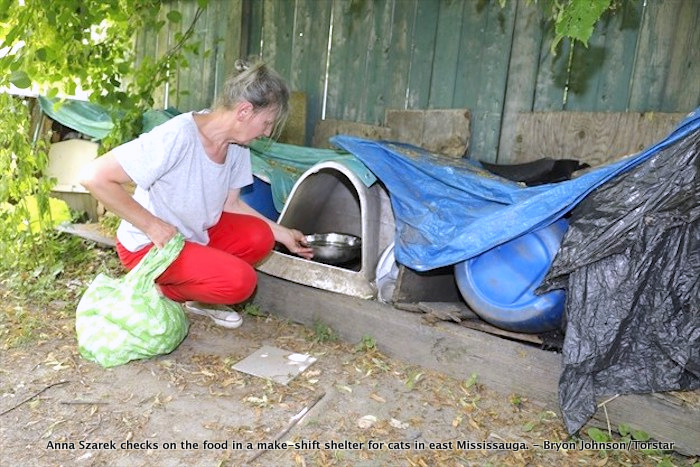 Anna Szarek checks on the food in a make-shift shelter for cats in east Mississauga. - Bryon Johnson/Torstar
