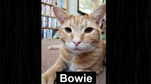 Bowie - a cat shot accidentally by a foolish person firing a gun in an adjacent apartment
