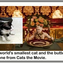 Butter knife scene cat compared to tiny real cat