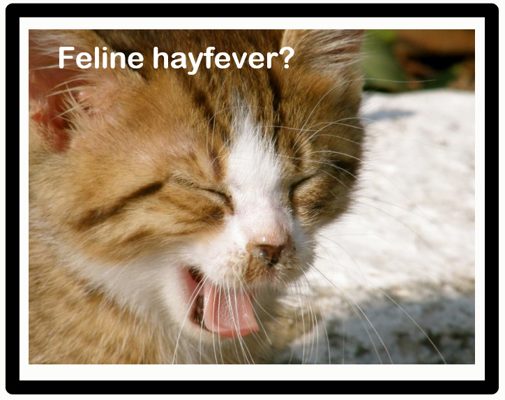 Cat cats get hayfever? Yes.