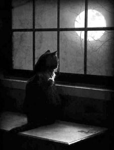 Cat looking outside at night