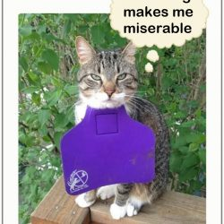 Cat with bib