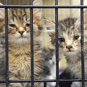 Cats at Dothan Animal Shelter (with URIs)