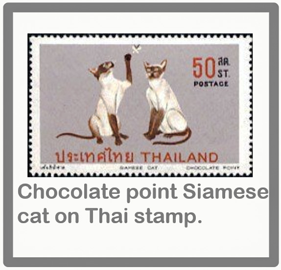 Chocolate point Siamese cat on Thai stamp