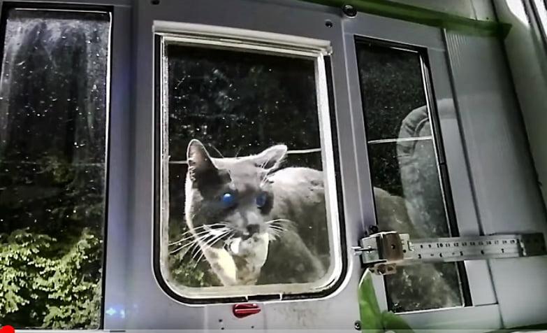Clever cat door