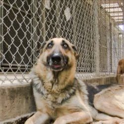 Dog at shelter destined for a vet school and ultimately euthanasia
