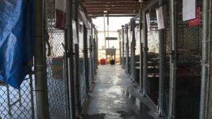 Dothan Animal Shelter