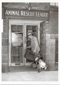 A Cat makes a great escape from the Animal Rescue League of Boston, 1940