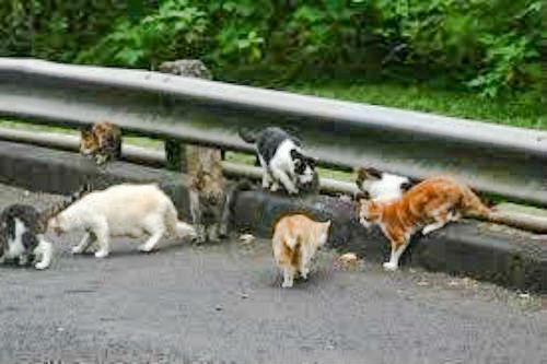 Feral cats of Half Moon Bay in Croton On Hudson