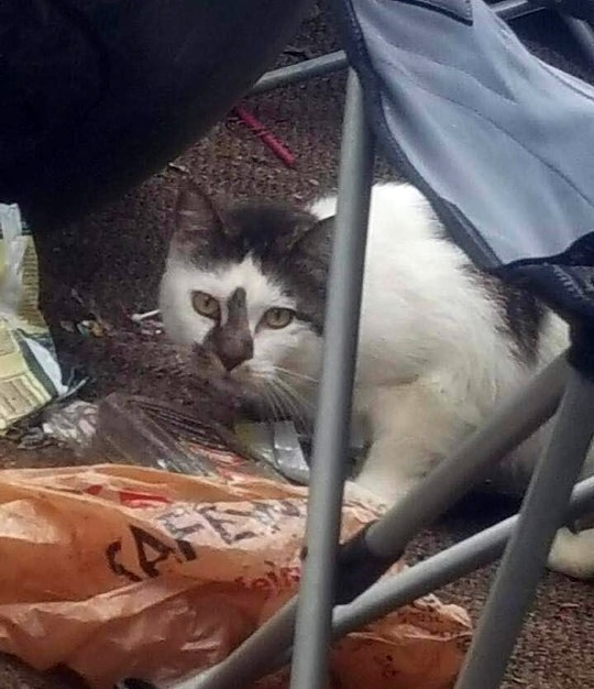 cat reunited with owner