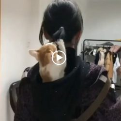 Kitten plays with girl's ponytail