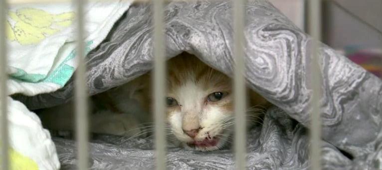 Kitten rescued from road