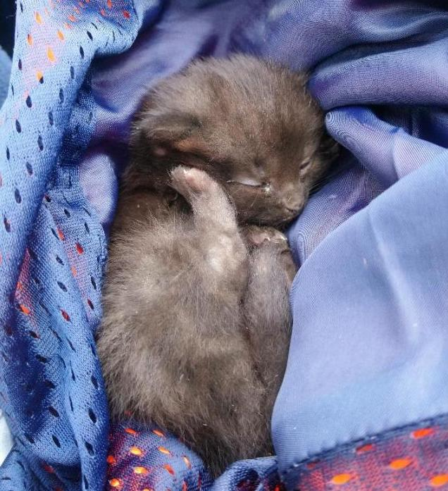 Miracle motroway kitten