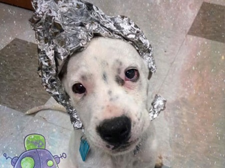 dog with tin foil hat