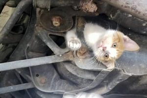Picture of young cat trapped in frame of car