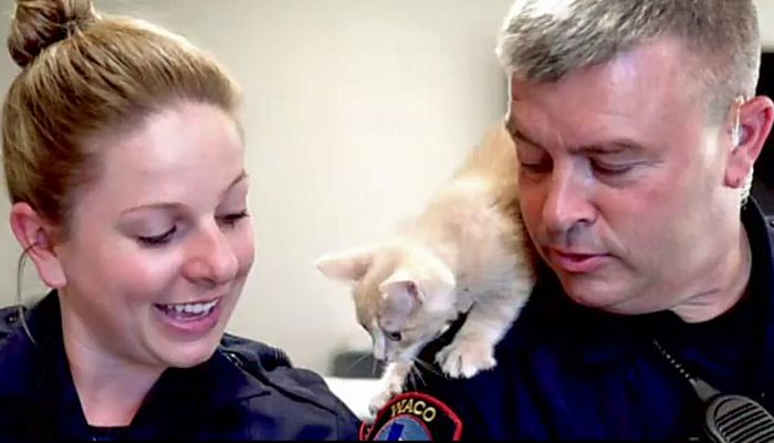 Police promote adoption of cats at Humane Society of Central Texas. Photo: the Humane Society