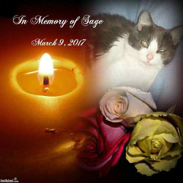 Sage the Cat memorial on Facebook