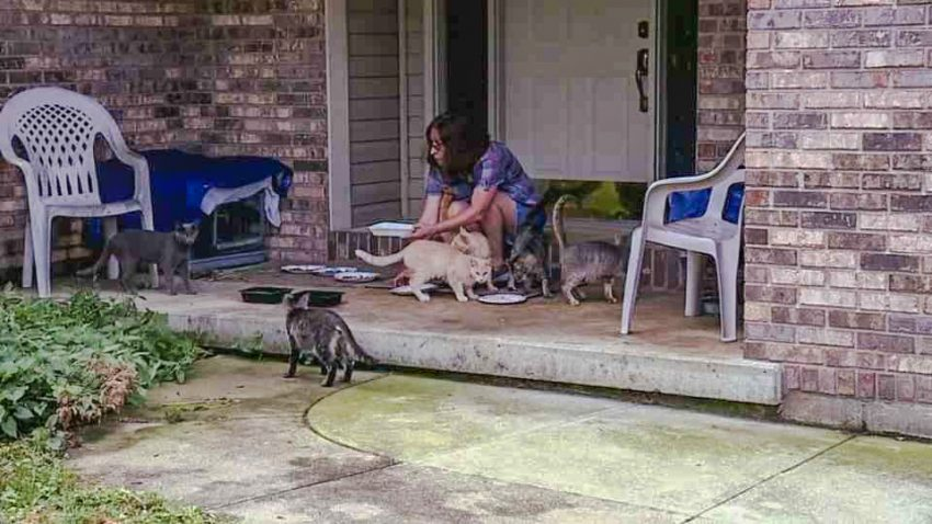 Indiana woman who can't cope with caring for feral cats because there are too many