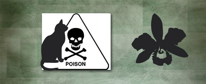 Cat poisons