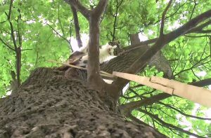 Cat in Poland has lived up an oak tree for 6 years