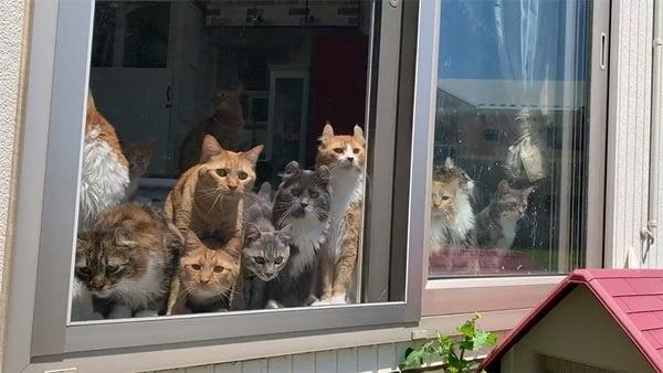 cats watching rice paddy