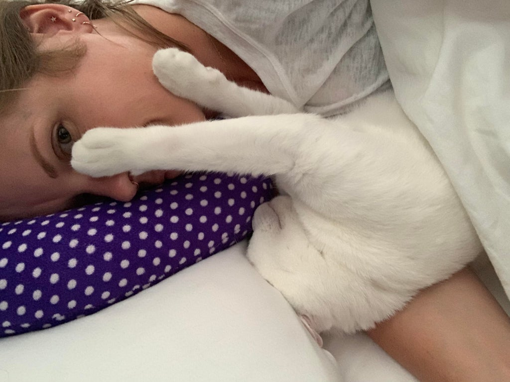 Domestic cats desire to touch us for comfort, friendship and to give affection