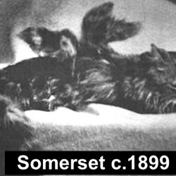 Image of winged cat from Somerset, England 1899