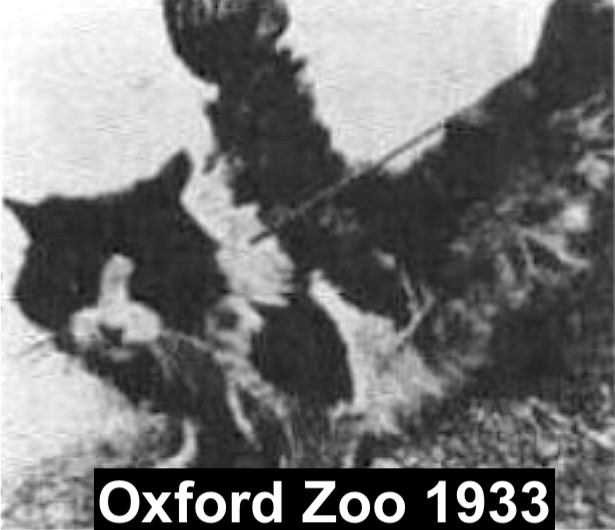 Image of winged cat from Oxford 1933