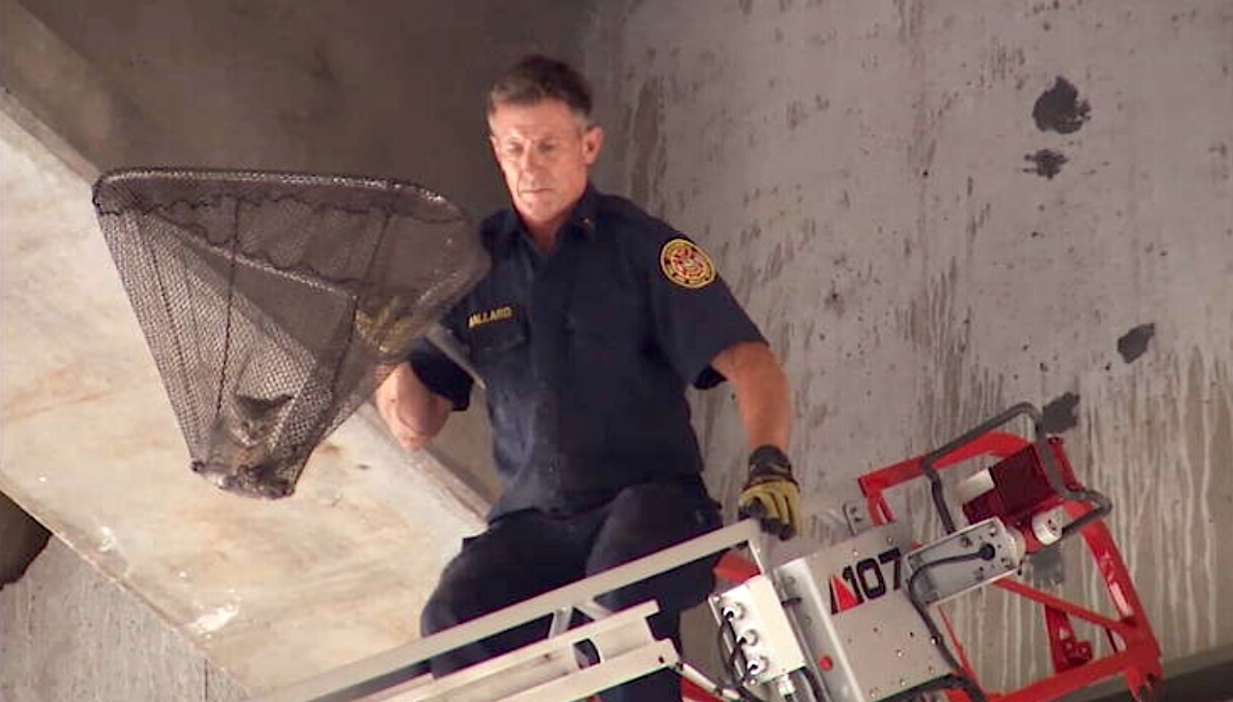 kitten in large net being rescued by firefighter using a mechanical ladder