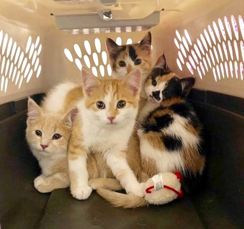 kittens found in dumpster