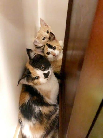 kittens posing
