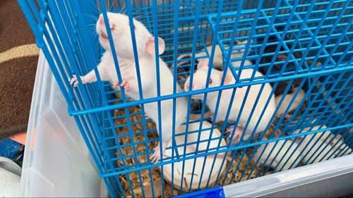 animal cruelty case
