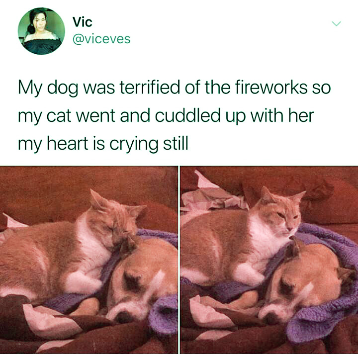Cat cuddles up with dog during fireworks