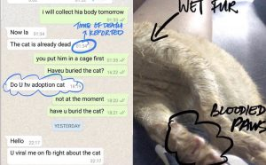 Sicko man adopts cats from rescue to kill