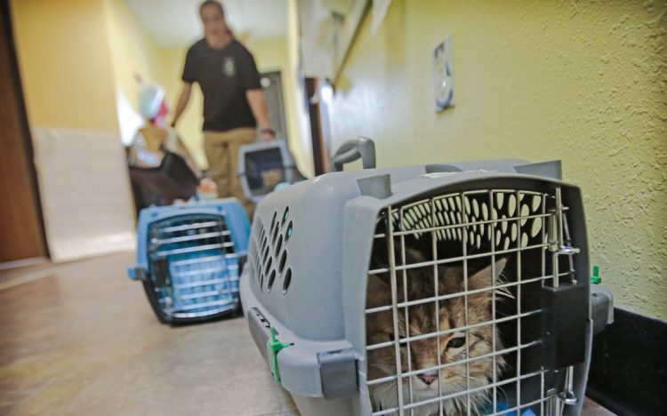 The rescued cats at CATS Cradle