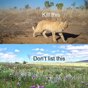 Australia's sloppy and hypocritical approach to protecting wildlife