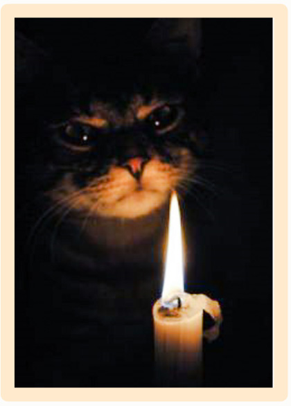 Candles and cats can be a dangerous combination