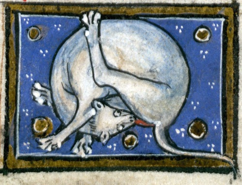 Middle Ages pictures of cats licking their anus