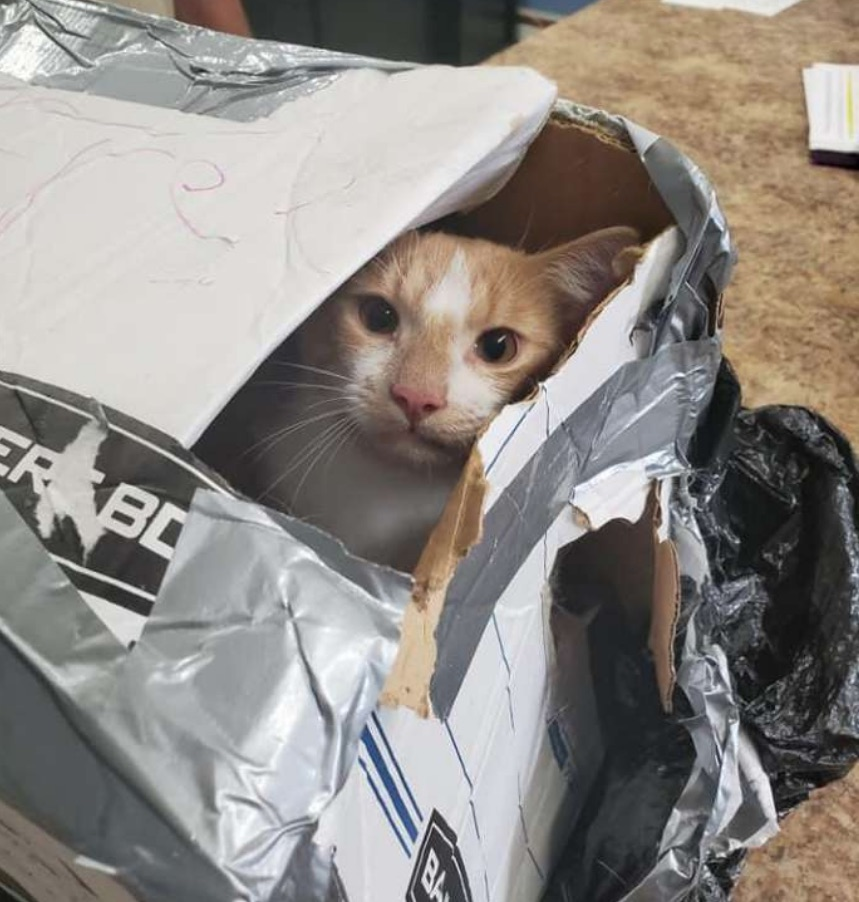 Cat thrown from bridge in sealed box