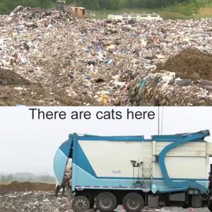 Accusations that landfill workers are killing stray cats